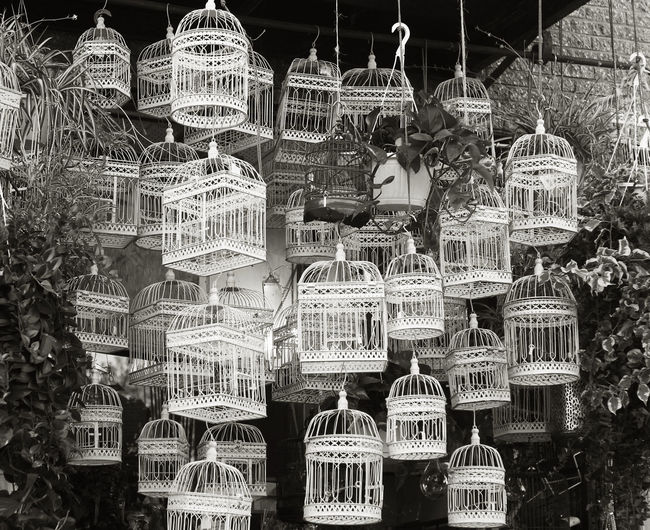 I KNOW WHY THE CAGED BIRD SINGS Nature Plants Beauty Bird Cages Blackandwhite Photography Collection Hanging Plant Urban