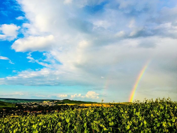 No People Rainbow Champagne Champagne Region Nopeople Blue Sky And Clouds Champagne Grapes Green Grapes Wine Grapes France Wine Nature_collection Best EyeEm Nature EyeEm Nature Lover Nature Photography Naturelovers Nature_perfection Vivelafrance