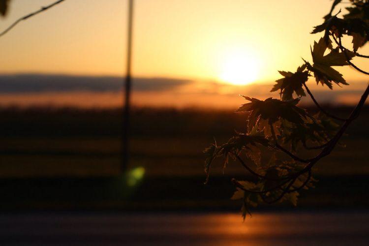 Close-up of silhouette tree against orange sky