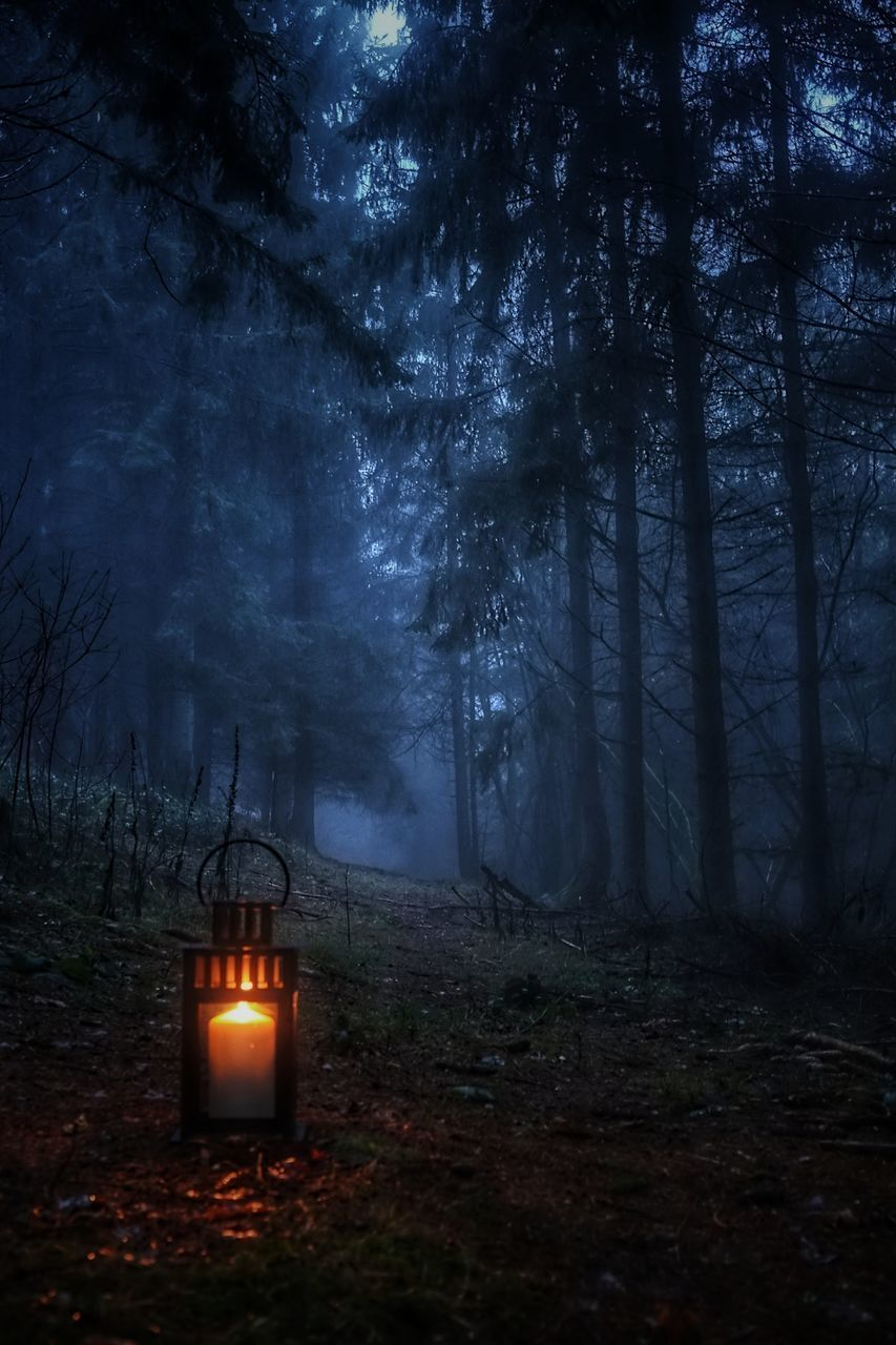 tree, land, forest, plant, nature, candle, no people, fire, night, flame, burning, tranquility, spooky, illuminated, dark, fog, cemetery, woodland, fire - natural phenomenon