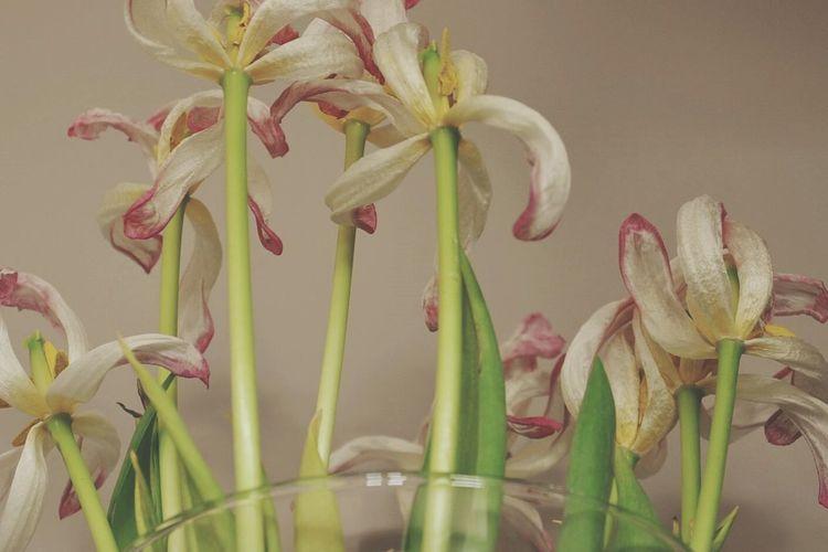 Wilted Flower Wilted Flowers Wilted Flowers Tulips Tulip Vase Pastel Power Pastel Pastel Colors Petals Petal
