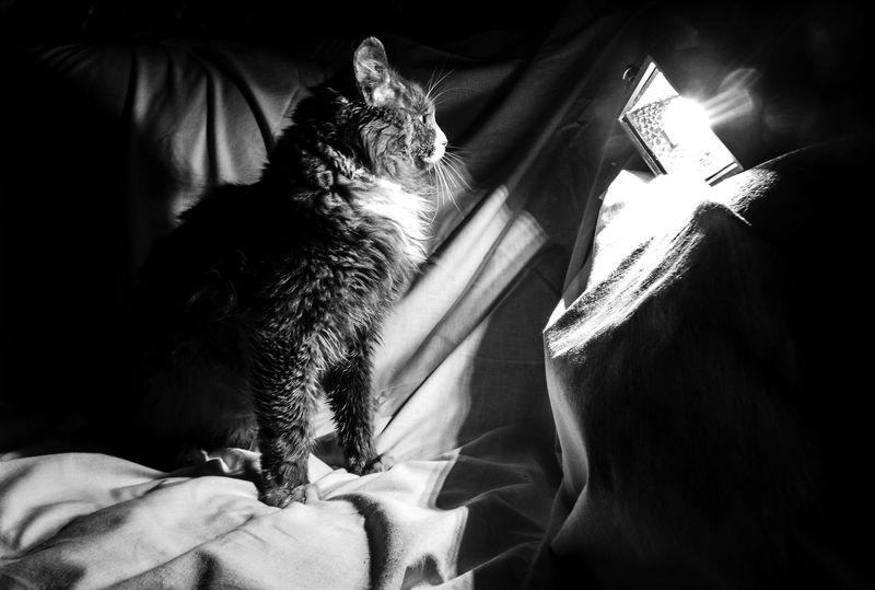 Cat♡ Cat Cats 🐱 Cats Of EyeEm Cats Cat Lovers Котейка котэ котыкошки Коты котики😻 котики кот котикитакиекотики Котик котята Live For The Story