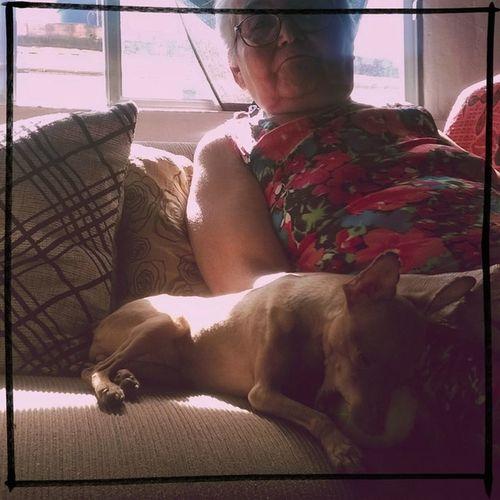 Dogs Home Grandmother Balls :) Hipstamatic Oggl Raymarkii Rtv