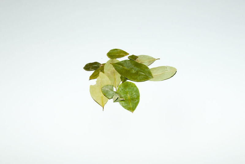 Coca Leaves Coca Leaf Coca Food Leaf Nature Plant Studio Shot