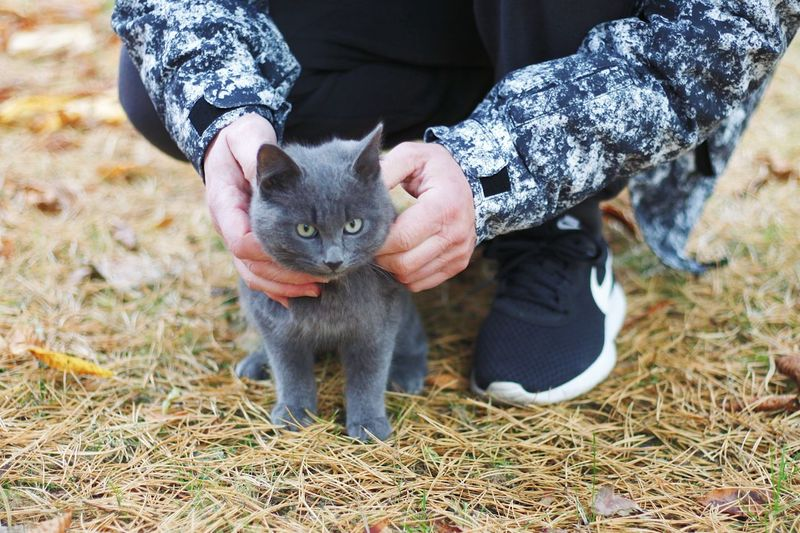 Midsection of person holding cat on field