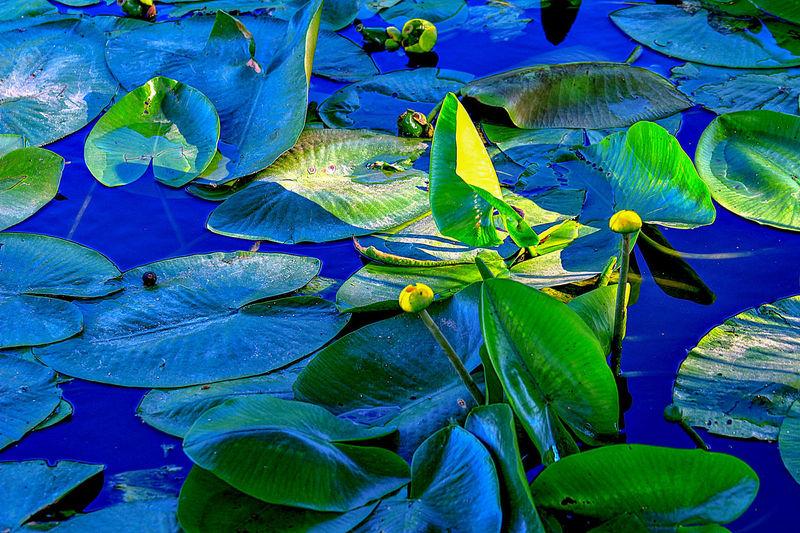 Water Leaf Blue