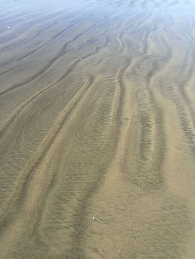 Wet Sand Beach Bird Prints In The Sand Foot Prints In The Sand Patterns In Nature Sand & Sea Wet Sand,