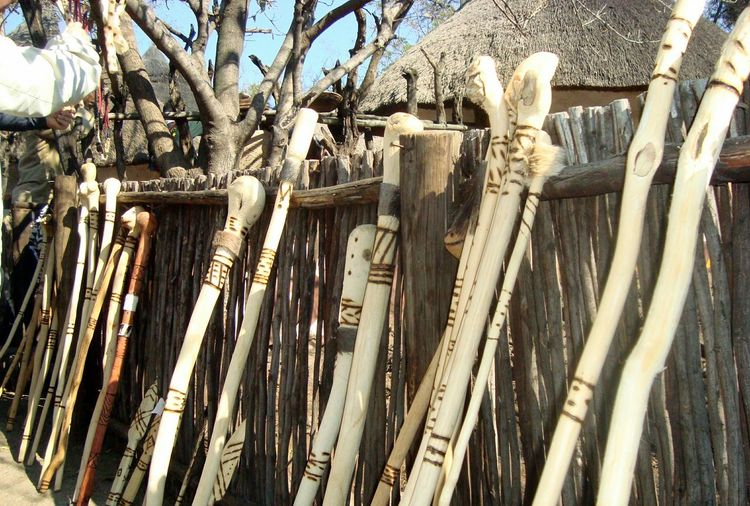 african flares Day Outdoors No People Zulu Nation Zulu South Africa Johhanesburg Lesedi Cultural Village Close-up Johannesburg Gauteng Rethink Things African Flares Tree Growth Bamboo - Plant Nature Bamboo Grove