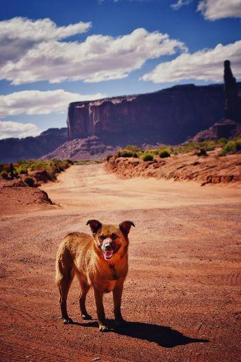 Dog In Wilderness