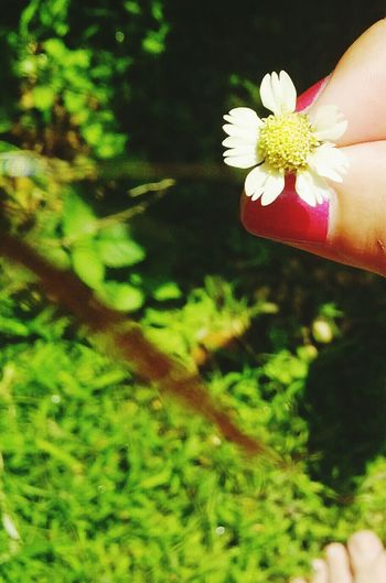 Esta florecita me trae recuerdos de peque... Hello World Taking Photos Flowers Little Flower