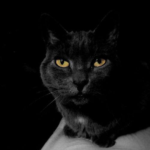 Millycat RussianBlue Cat Cats neko catsofinstagram catstagram catofthedayilovemycat love instapurrs kittiesofinstagram instagrammers instahub instagramcats instacats instagood greycat 고양이 猫 ねこ