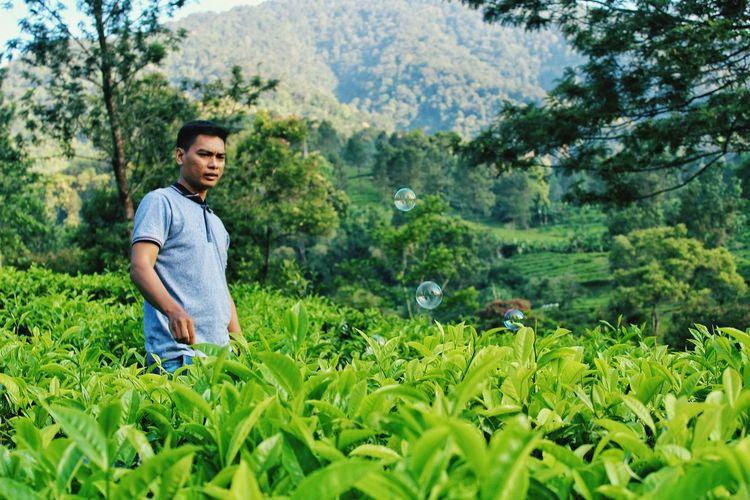 Man standing in tea plantation