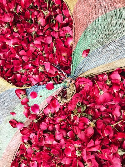 Flower Market Beauty In Nature Close-up Day Flower Flower Head Flowering Plant Fragility Freshness Growth High Angle View Leaf Lifestyles Maroon Nature No People Outdoors Petal Pink Color Plant Plant Part Red Rose - Flower Roses Vulnerability