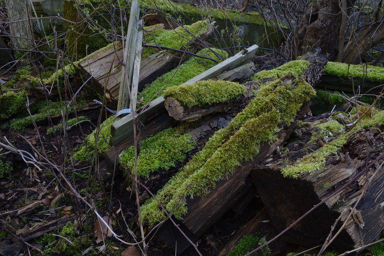 Fallen Tree Forest Green Color Log Lost Place Lostplaces Moos Moss Nature Outdoors Overgrown Plant Root Rotting Rotting Wood Tree Tree Trunk WoodLand Backyard