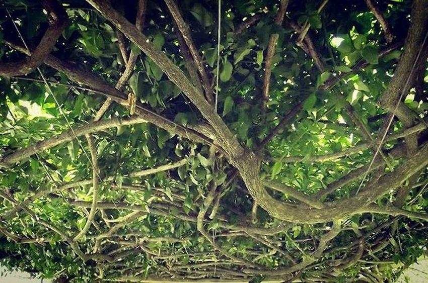 Wisteria Overgrown Greenery Nature Cornwallpark 1word1pic_up 9vaga_twisted9 9Vaga_ColorGreen9 Ss_green_04