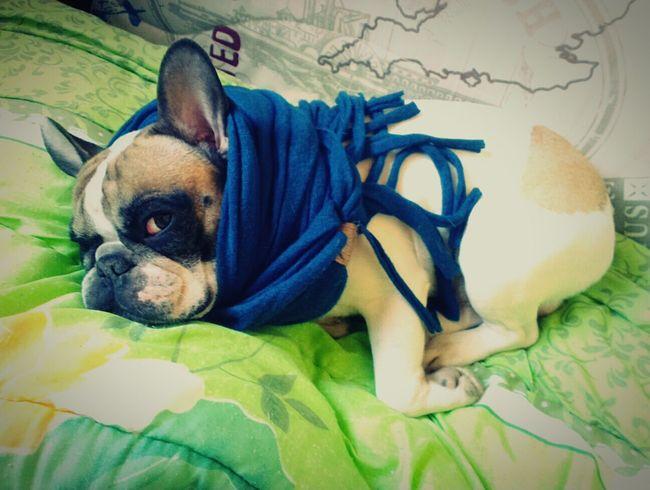 Рим приболел I Love My Dog