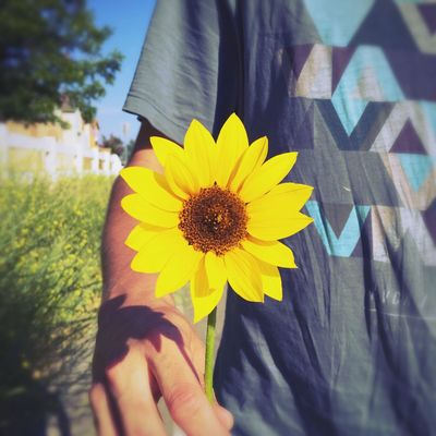 my summer love gave me a miniature sunflower before I left Summer Sunflower Cute Alwayshandedflowers Flower Yellow Sunshine