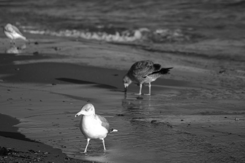 Animal Themes Animal Wildlife Animals In The Wild Beach Bird Day Nature No People Outdoors Sand Sea Water Eyem Nature Lovers  Seagulls Ostsee Ostseeküste Travemünde Find Eyem Nature Lover