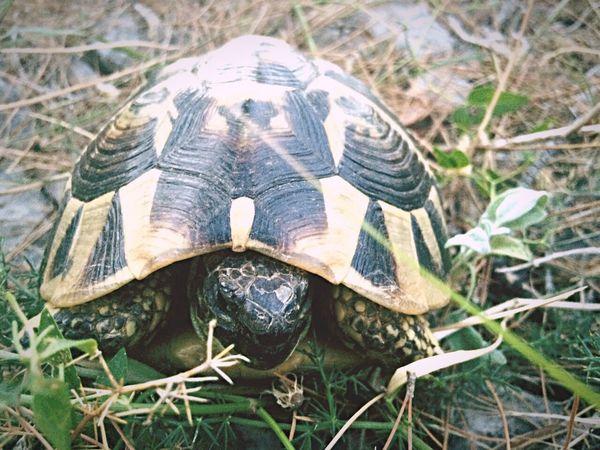 Turtle Nice Kroatie Camping Simuni