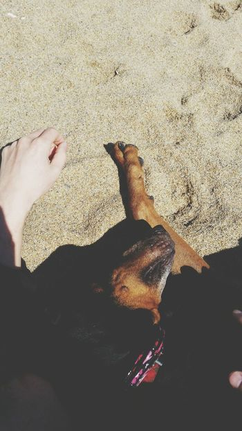 Napping Beach