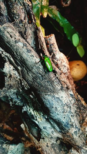 Bugs Life Bug