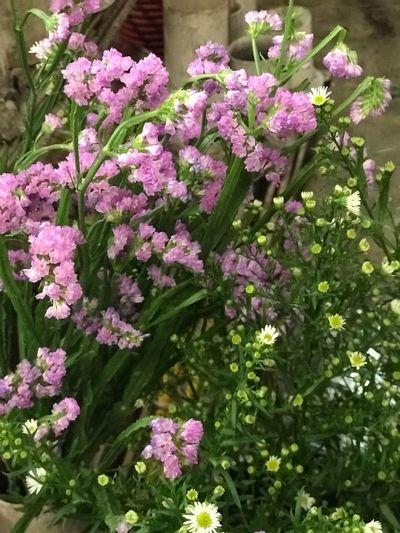 flower #EyeEmNewHere Flowering Plant Flower Plant Vulnerability  Fragility Freshness Beauty In Nature