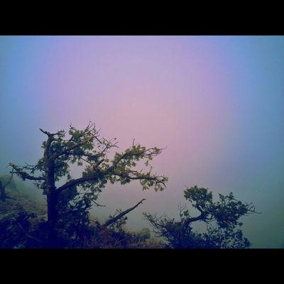 الضباب يعانق قمم الجبال  جبل_نهران  تصويري Iaseeer Hesabatjnobia abha
