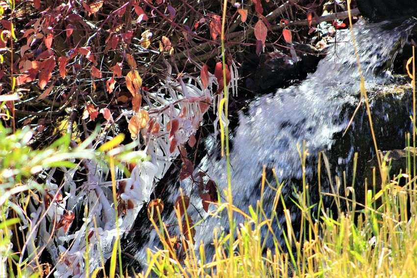 Water Nature Plant Motion Day No People Outdoors Beauty In Nature Growth Land High Angle View Blurred Motion Plant Part Leaf Close-up Grass Long Exposure Field Green Color Flowing Flowing Water Purity Pollution Ice