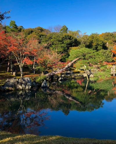 Tenryuu-ji Temple Maple Tree Water Reflections Pond Lake Japanese Garden Clear Sky Autumn Colors Tree Nature Reflection Tranquil Scene Autumn Beauty In Nature Scenics Outdoors Lake Tranquility Day Water No People Blue Growth Clear Sky Sky Landscape Mountain Grass