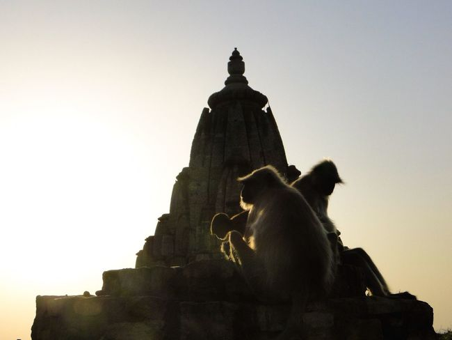 Evening sun in Rajasthan Rajasthan Rajasthan Jaipur Monkey Temple Templephotography Indian Temple Shot At Indian Temple Sunset Silhouette Silhouette_creative