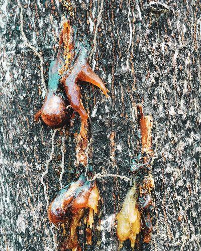 Resina de árbol