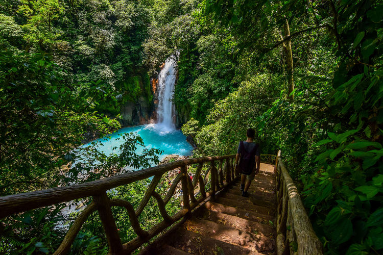 a man going down the stairs to turquoise waterfall surrounded by jungle Costa Rica Green Color Travel Trip Tropical Paradise Adventure Forest Junge Motion Nature One Man Only Scenics Stars Travel Destinations Tropical Plants Turquoise Waterfall Young Adult