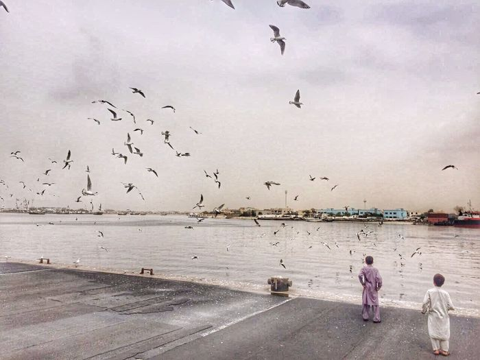 Flock Of Birds Dubai Flying Bird Sea Full Length Large Group Of Animals Outdoors Sky Real People Togetherness Animal Themes Ajman Fish Market From Where I Stand Horizon Over Water Nature Beauty In Nature Day Water Bur Dubai Dubai Food Fresh Seafood Old Dubai Children Photography