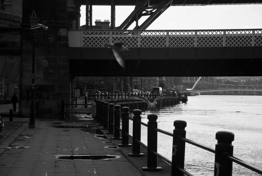 Black And White Friday Newcastle upon Tyne Newcastle Upon Tyne Bridge - Man Made Structure Connection Bridge Architecture Water Landscape England