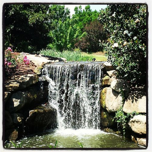 Don't go chasin' waterfalls... :) Waterfalls Huntervalleygardens