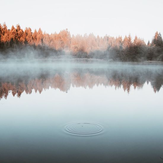 Reflection Lake No People Scenics Autumn Water Change Tranquility Tranquil Scene Beauty In Nature Nature Fog Day Tree Outdoors Leaf Sky Morning Ripples Mist Switzerland Lake View