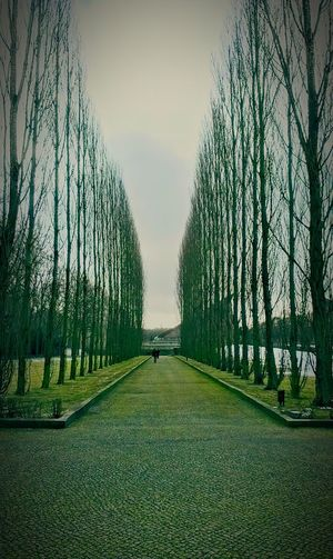 Berlin Traveling Travel Trees Tree_collection  Green Memoryline