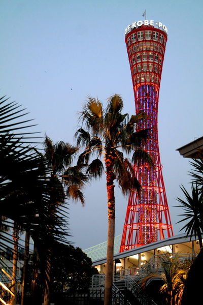 EyeEm Best Shots EyeEm Selects EyeEm Gallery EyeEmBestPics From My Point Of View Port Tower The Week on EyeEm Arts Culture And Entertainment Blue Sky Built Structure Clear Sky Coconut Palm Tree Eye4photography  Harbor View Illuminated Kobe Kobe Port Kobe Port Tower Kobe, Japan Low Angle View Palm Leaf Palm Tree Tall - High Travel Destinations Tropical Climate