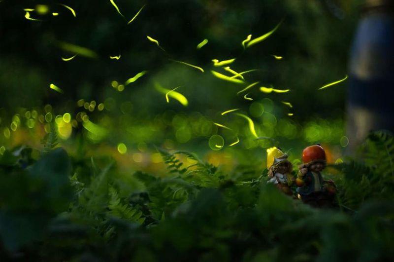 Lightbugs