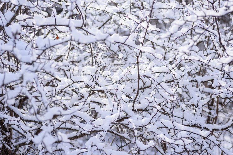 Close-up of frozen tree branches during winter