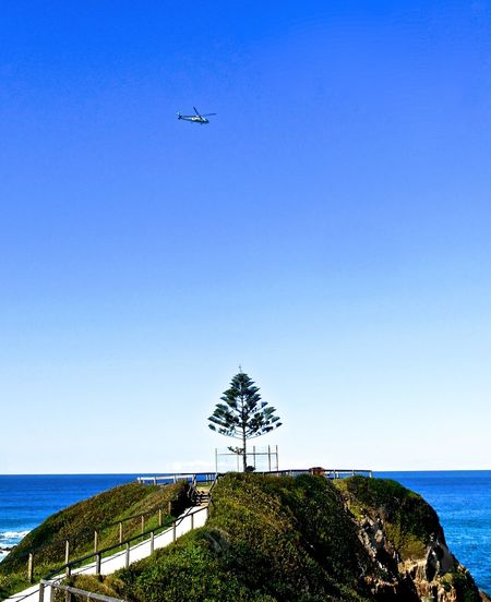 Tree Against Calm Blue Sea