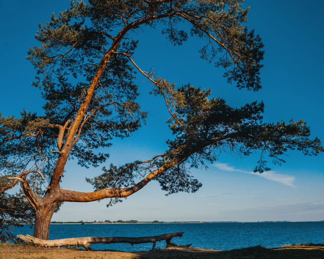 Trees by sea against blue sky