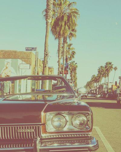 Venice Beach Venice Beach, California Abbot Kinney Palm Trees Vintage Cars