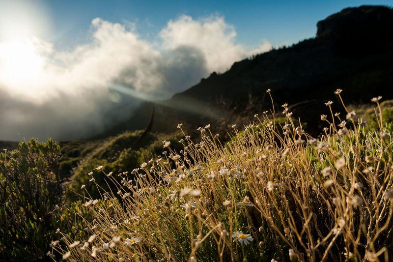 Parque nacional del Teide, Tenerife. Canary Island, Spain. Nature Nature Photography Sunlight Teide National Park Beauty In Nature Cloud - Sky Environment Landscape Nacionalpark Nature No People Non-urban Scene Outdoors Sky Sunlight Sunset Teide Teidenationalpark Tenerife Tenerife Island Tranquility #FREIHEITBERLIN
