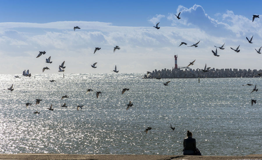 Seaport District Sea And Sky Sochi Sky And Clouds Birds Fly Birds Girls