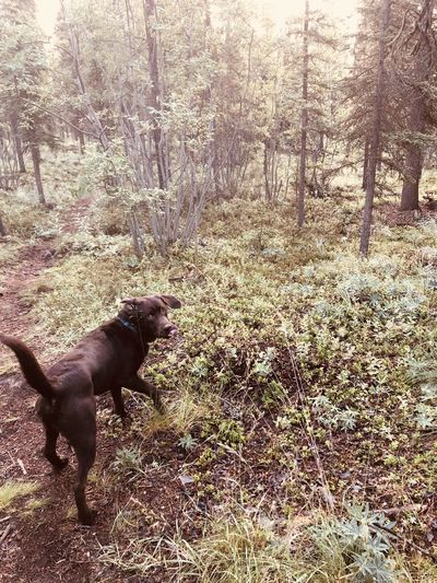 Side view of a dog in the forest