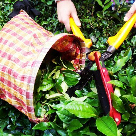 Vscogood VSCO Vscocam Vscophoto Photography Photographer Rize Rize/Turkey çay