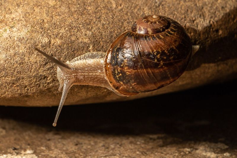 Mollusc Animal