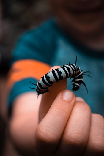 Midsection of boy holding caterpillar