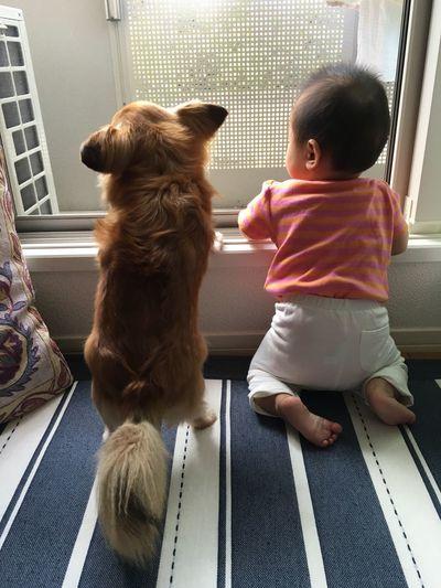 Mixdog Dog Chihuahua チワワ チワックス 犬 Baby Dogandbaby